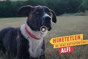 Rendhagyó videós sajtóközlemény Alfitól: 300.000 kutyának nincs hova hazamennie