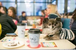 Mégsem vagyunk eléggé kutyabarátok? Érdemes-e állatbarátnak lenni a turisztikai piacon?