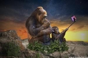 Szelfiző turisták veszélyeztetik az állatokat