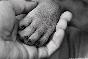 Rejtélyes betegség öli meg a kutyákat Norvégiában