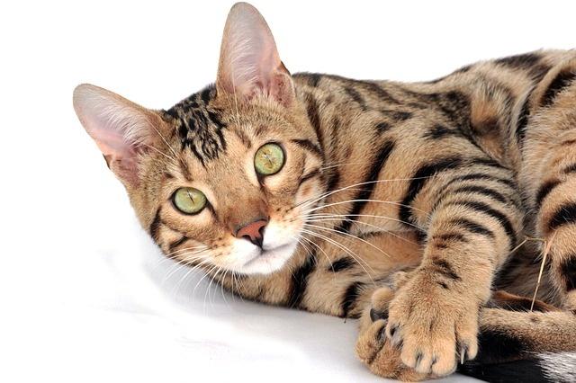 cat-2048416_640