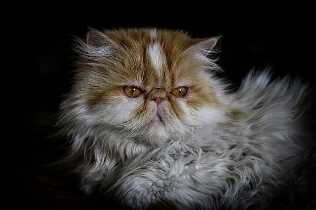 cat-2182624_640