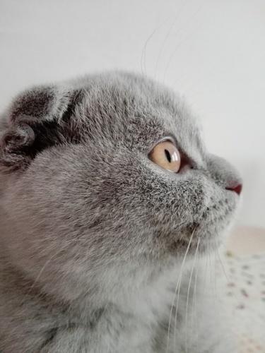 cat-3031518_640