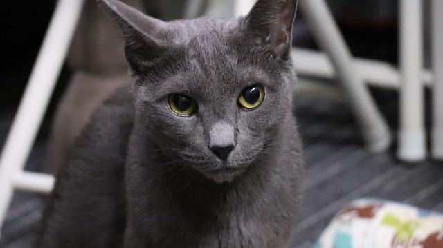 cat-3666983_640