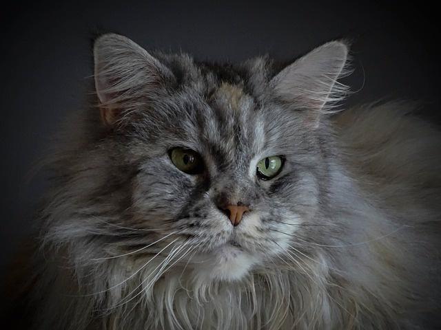 cat-4458418_640