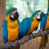 Egyszerre három arafióka született a Debreceni Állatkertben