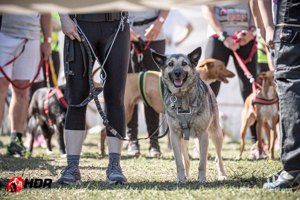 Hard Dog Race 2019