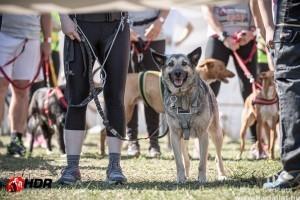Egerbe érkezik a Hard Dog Race