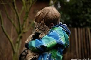 A cicák is úgy tudnak kötődni a gazdihoz, mint egy kutya