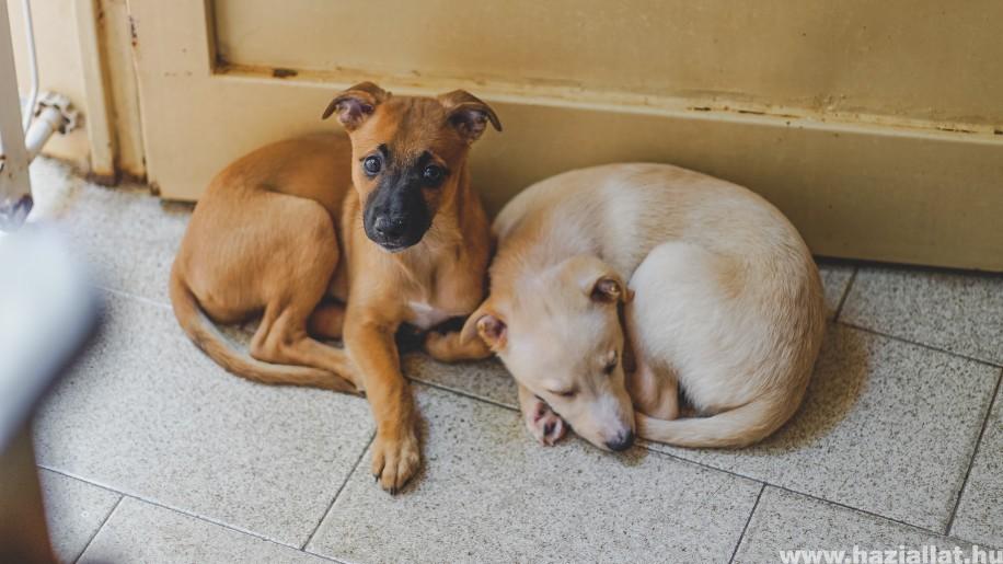 Rühesség kutyáknál: okok, tünetek és kezelési lehetőségek