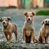 320 kutya talált haza a MOL-kutak mikrochip-leolvasóinak segítségével
