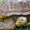 Elpusztult a világ egyik legidősebb teknőse