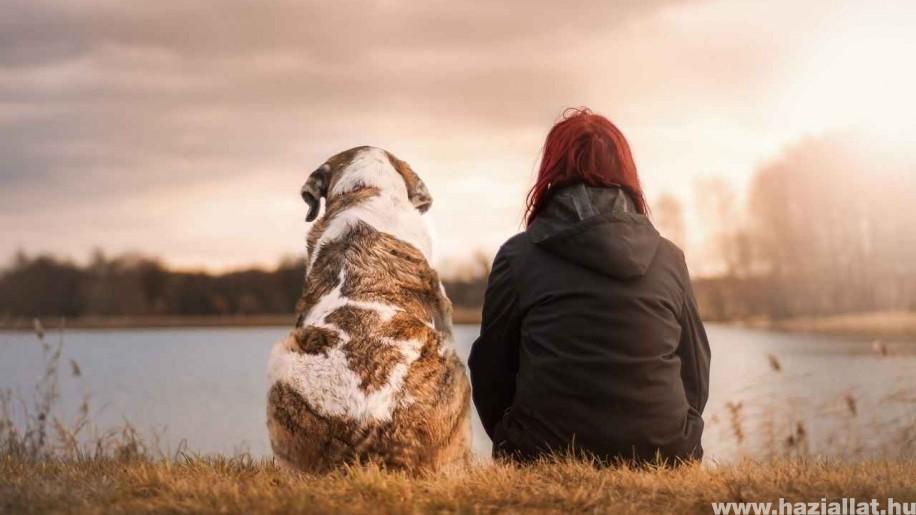 A kutyatartás csökkenti a gazdi elhalálozásának kockázatát