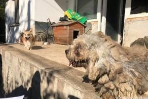Újabb horrortanya: kutyák, szurikáták, ormányos medve a