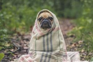 Ősszel és télen is védekezni kell az élősködők ellen