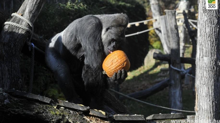 Halloween a Fővárosi Állatkertben