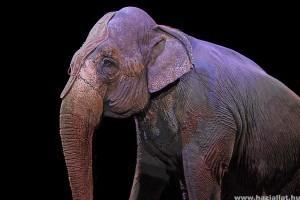Szlovákiában is betiltották az állatok cirkuszban való szerepeltetését