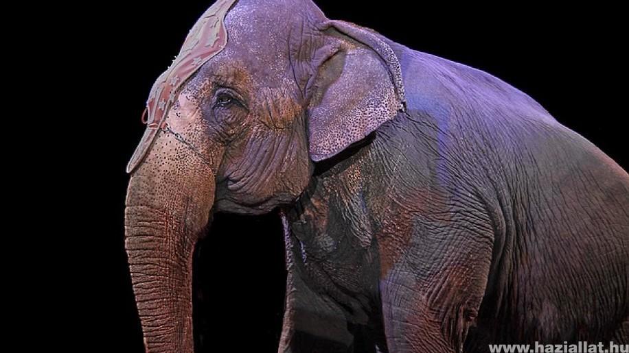 Szlovákiában nem szerepelhetnek vadállatok cirkuszban