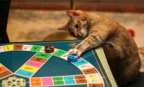 macska_jatszik