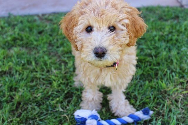 puppy-2441961_640
