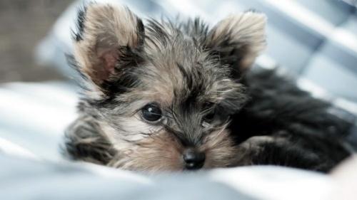A Rák jegyében született kutya...  készséges, érzékeny és türelmes jószág.