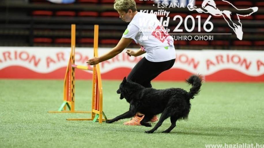 Ingyen agility edzés magyar kutyafajtáknak