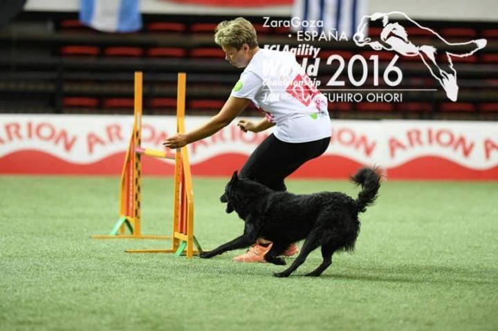 magyar_kutyafajtak_agility