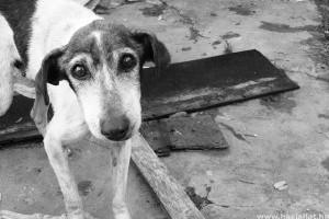 Szövetségi bűncselekmény lett az állatkínzás Amerikában