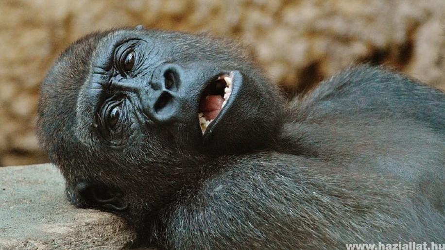 200 forintért be lehet menni a Fővárosi Állatkertbe Mikuláskor