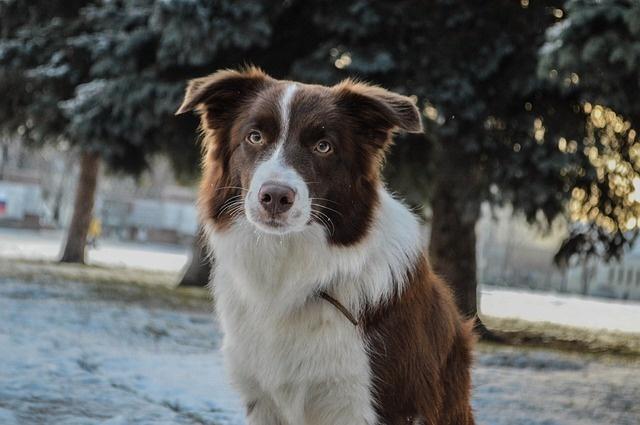 dog-4441580_640