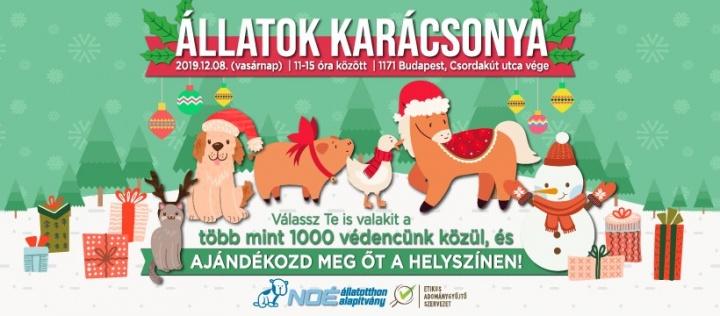 allatok_katija