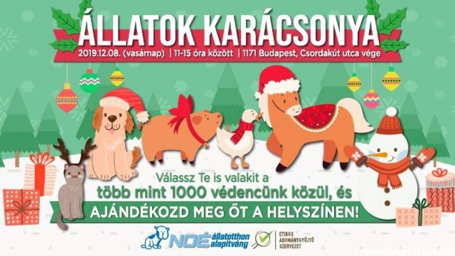 Hétvégén Állatok Karácsonya a Noé Állatotthonban