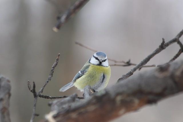 bird-3278571_640