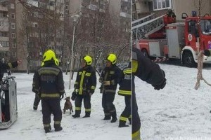 Egy nyolcadik emeleti lakás erkélyén lógott órákat egy pitbull