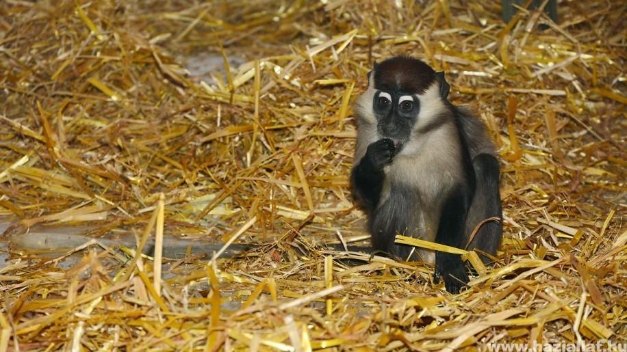 Ilyet még nem láttál - Különleges állatka látható a Miskolci Állatkertben