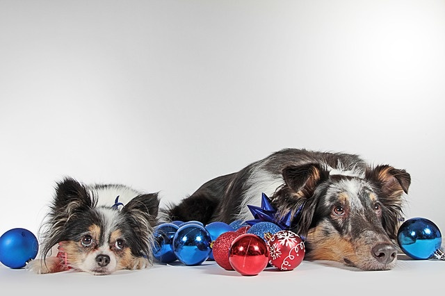 dogs-3091321_640