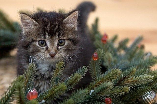 kitten-2965641_640