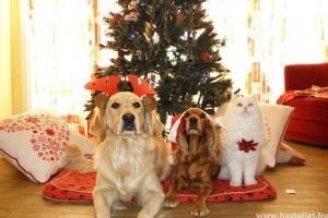 Töltött káposzta, bejgli - a karácsonyi menü ártalmas lehet kedvenceink számára