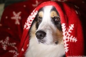 A karácsonyi stressz a háziállatokon is meglátszik!