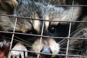 Állítsuk meg az állatkísérleteket — sok kicsi sokra megy!
