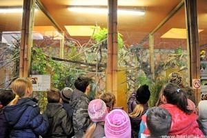 Év végéig kedvezményesen látogatható a Nyíregyházi Állatpark