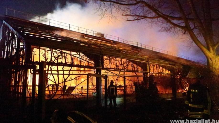 30 állat meghalt, mikor egy eldobott tűzijáték miatt tűz ütött ki az állatkertben
