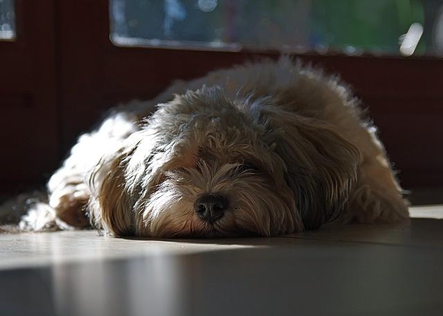 dog-2335335_640
