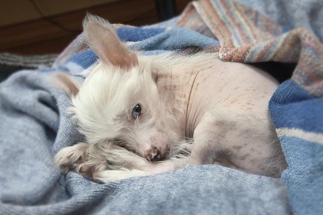 puppy-1684821_640