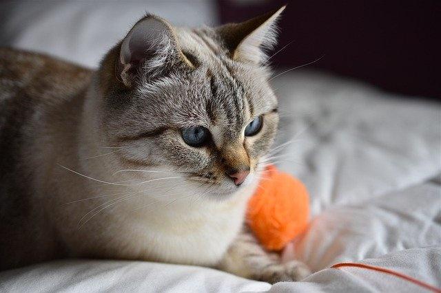 cat-4256821_640