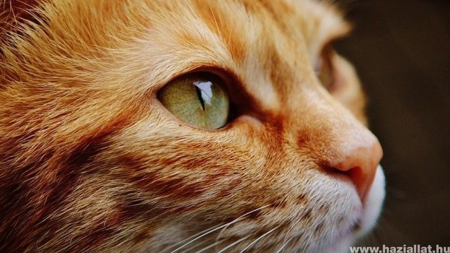 Hány évig él átlagosan egy macska?