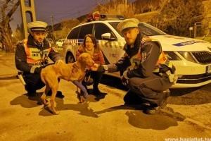 Rendőrök segítettek a bajba jutott vizslának
