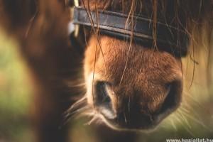 Ha a lovak beszélni tudnának...