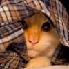 Állathoroszkóp: Szűz (augusztus 24-szeptember 23.)