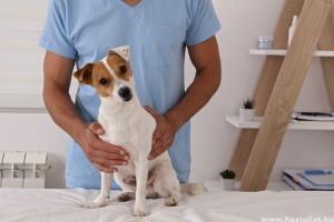 Oltási felhívás Lyme kór ellen - így védheted meg kutyádat!